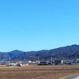きょうの散歩は、春のような日差しで、快適でした