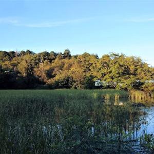 真夏の小山池