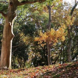 お散歩~チョコチョコッと静岡を。