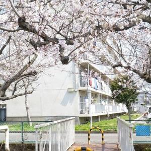 お散歩~ご近所の桜散策♪