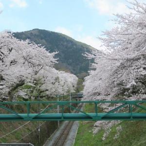 エア・お花見。御殿場線・神奈川の山北駅♪