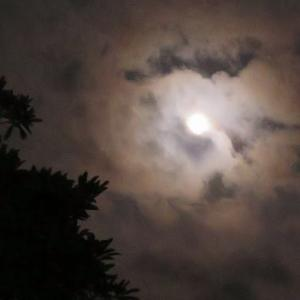 お月様が綺麗ですね♪
