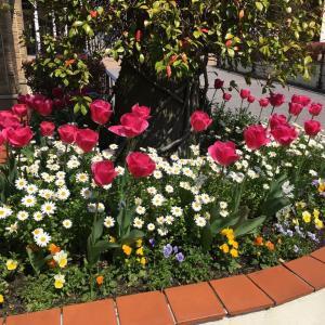 美しい花も愛でてくれる人がいなくて寂しそう 、、、 LINEによる新型コロナウイルス第2回目調査。