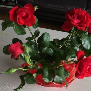 🥀 昨日、棘を取る暇がなくて 、、、 きょう薔薇の花は生けましたよ。