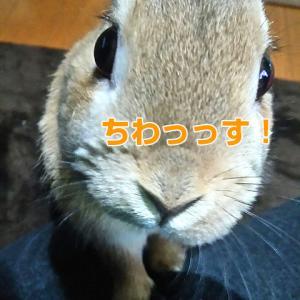 manaca(マナカ)落とした…