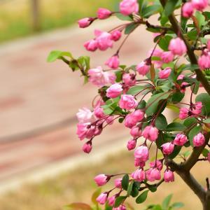 春の花写ん歩