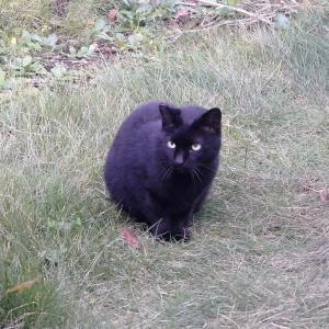 我が家の庭に新顔のお客さんが登場。
