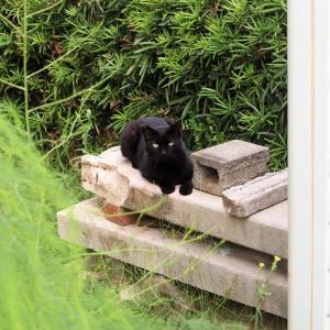 あの黒猫、まだいます。