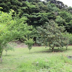 我が家の果樹園、今月は色々収獲できました。