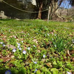 春を探しに・・・