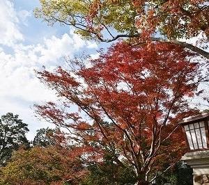 亀山公園山頂広場と瑠璃光寺とSLやまぐち号