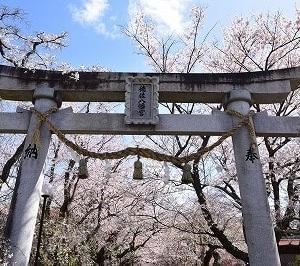 桜・サクラ・さくら2