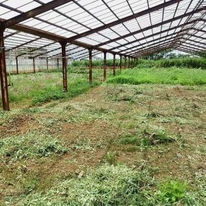 2020年7月24日 畑の肥料作りをしました。