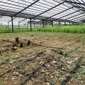 2020年8月9日 ナスをカーサポートミライさんや通販向けへ出荷、本年のスイカの栽培は終了しました。