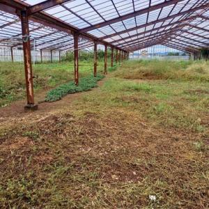 2020年10月18日 きぬさや種蒔きをし、畑の手入れをしました。