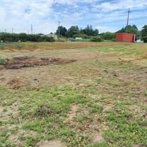 2021年6月20日 畑の手入れをしました。(ハニーバンダム穂がしっかりしてきた・いちご苗移植)「