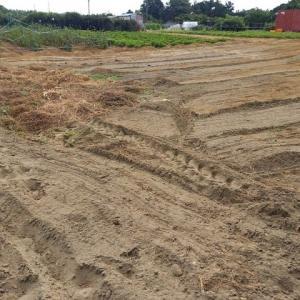 2021年7月26日 落花生畑の土寄せをしました。