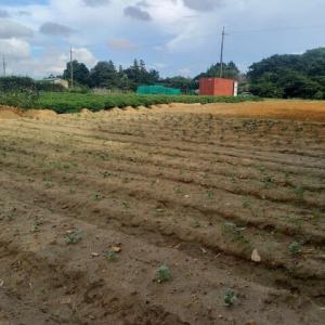 2021年9月22日 大根・きぬさや予定地畝作り途中迄行いました。