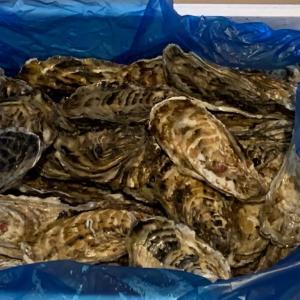 フードロスのおかげで6月の牡蠣