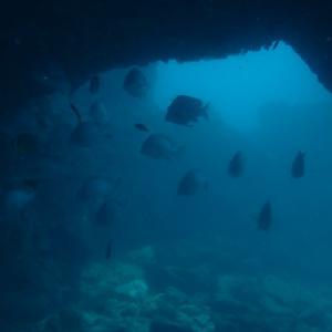 透明度は残念だけど魚はいっぱい