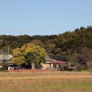 名木エノキ・鳴かずの池