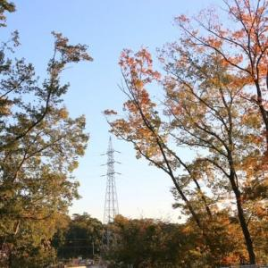 季節風・北風・空っ風<季節のたより>