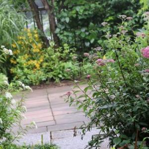 庭の花・日が長い夏至の花