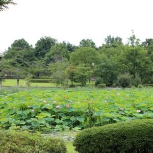 平成の森・蓮園