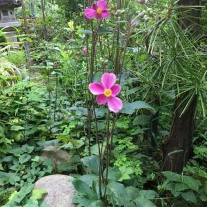 庭の花たち<花だより>
