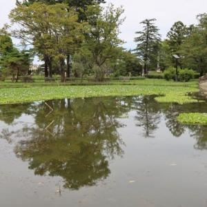 忍水城公園・アオイの池