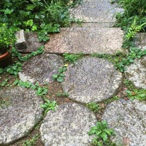 雨の庭石<エッセイ風>