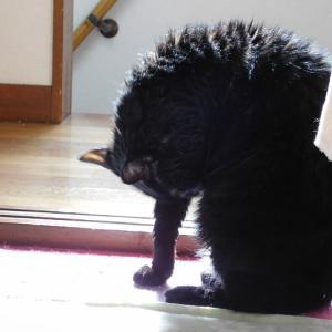 クマっこ♪ラジオ動画☆4回目配信です☆と☆猫のお風呂の後の悲しい出来事☆
