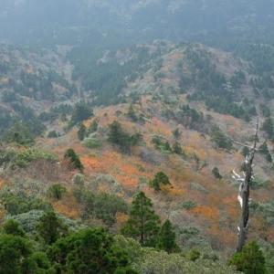 太鼓岩からの紅葉がピーク!【屋久島白谷雲水峡ガイドツアー】