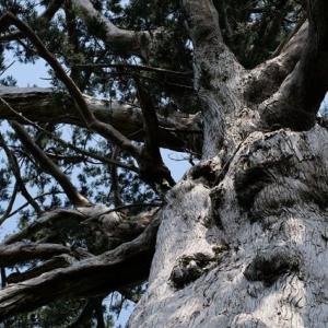 秋から春にかけておすすめする屋久島ガイドツアー。屋久島の岩峰・モッチョム岳。