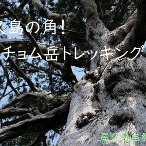 屋久島動画【屋久島モッチョム岳トレッキング】山頂からの大展望・春