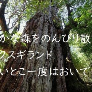 屋久島動画【屋久杉の森の原風景・ヤクスギランド】静かな森をのんびりと歩くことができる穴場コース。親子登山にも最適です。