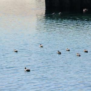 春の陽気に誘われて屋久島を半周ぶらり【屋久島風景写真】