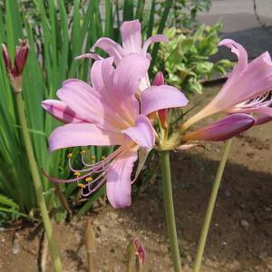 処暑に咲いている花