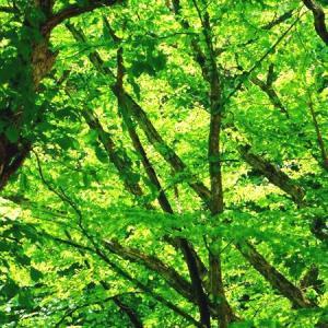 緑のトンネルを流れる川も緑映え