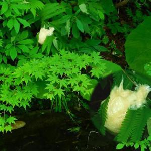 米代川源流自然の会 総会