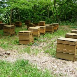 ミツバチ活躍中