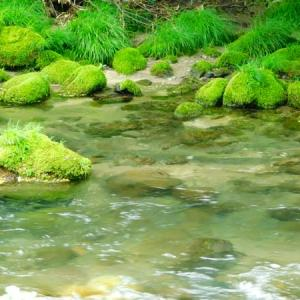 水面に緑を映して
