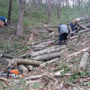 ほだ木搬出作業in神道洞