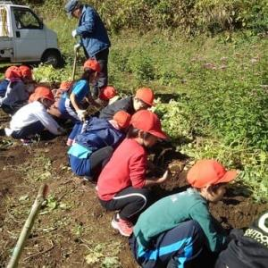 辰野東小学校1年生芋掘り体験