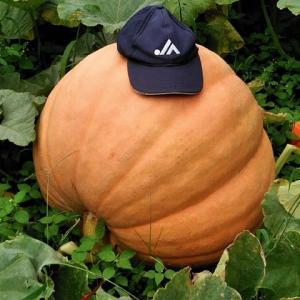 ジャイアントかぼちゃ&コリンキー
