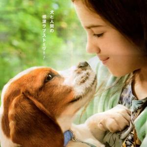 僕のワンダフル・ジャーニー(映画)