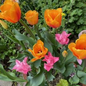 花壇は花盛り