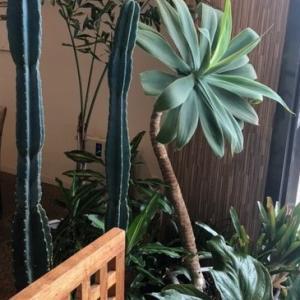 観葉植物 新芽