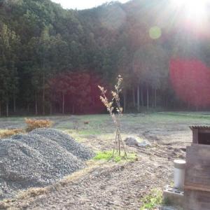 '20.04.02 オカリナの里の佐野桜が咲き始めました