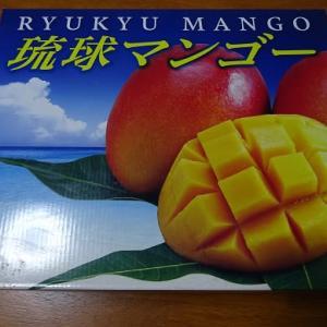 OKINAWA産マンゴー。
